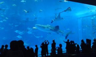 111106美ら海水族館.jpg